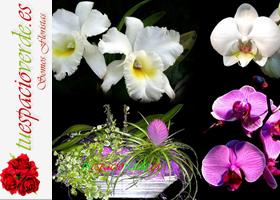 ¿Te gustan las orquídeas?
