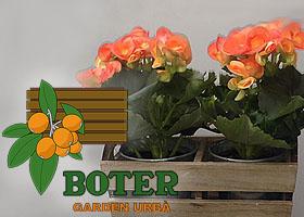 """Duo de Begonias por """"Garden Urbano Boter"""""""